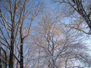 pamela wight snow