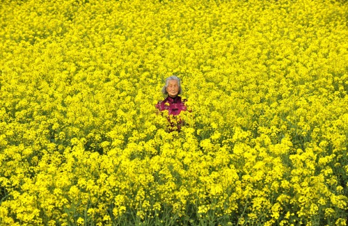 Elderly Jiangsu farmer in her field of rapeseed