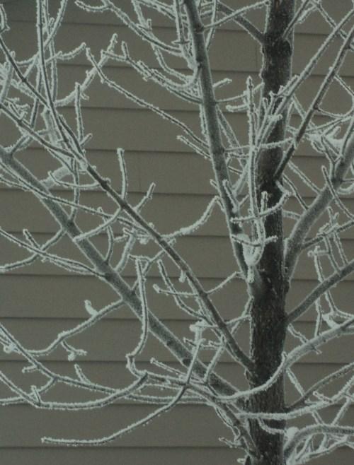Frosty tree, MAFB, North Dakota