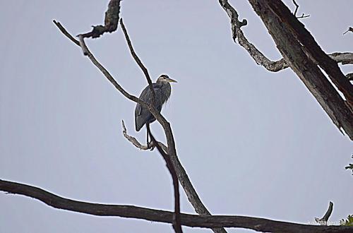 Kat bird