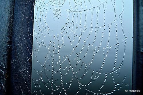 Kat spiderweb