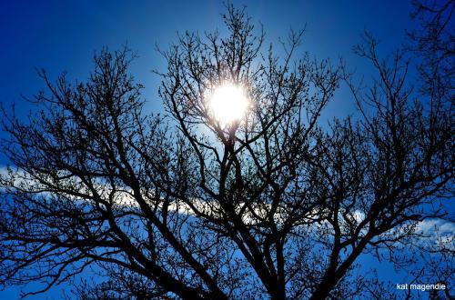 Kat tree