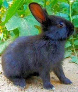 bunny t