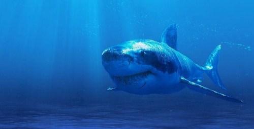 shark2 - Copy
