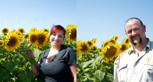 Sunflower Photo 7 copy