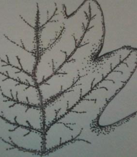 Leaf Partial